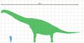 Brachiosaurus scale.png