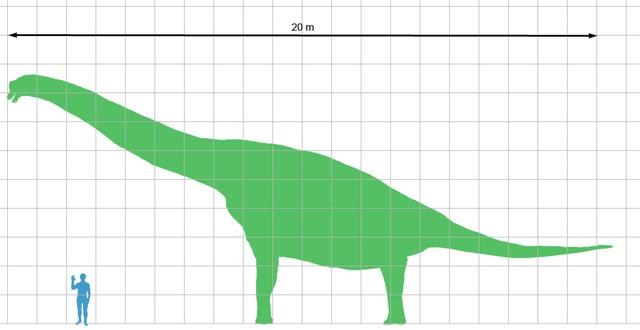 Brachiosaurus Human Scale