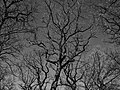 Branches (199426753).jpeg