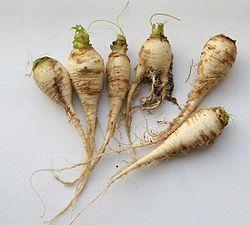https://upload.wikimedia.org/wikipedia/commons/thumb/0/0c/Brassica_rapa_ssp_rapa_var_pygmaea.jpg/250px-Brassica_rapa_ssp_rapa_var_pygmaea.jpg