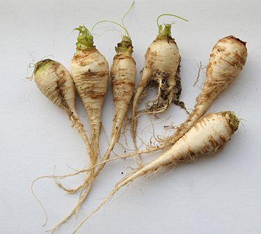 https://upload.wikimedia.org/wikipedia/commons/thumb/0/0c/Brassica_rapa_ssp_rapa_var_pygmaea.jpg/375px-Brassica_rapa_ssp_rapa_var_pygmaea.jpg