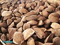 Brazil nuts with testa.jpg