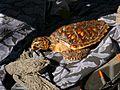 Brevard Zoo at Viera FL - Flickr - Rusty Clark (92).jpg
