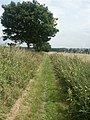 Bridleway, Intwood - geograph.org.uk - 87353.jpg