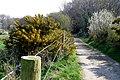 Bridleway near West Knighton - geograph.org.uk - 1247327.jpg