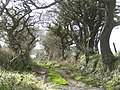 Bridleway west - geograph.org.uk - 370816.jpg