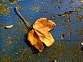 Brown on blue - Flickr - Stiller Beobachter.jpg