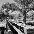 Bruiloft in de kibboets Yad Mordechai bij Asjkelon in het zuidwesten van Israel, Bestanddeelnr 255-4200.jpg