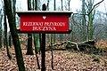 Buczyna Natural Reserve (5).JPG