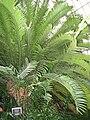 Buffalo and Erie County Botanical Gardens - 1-10 - IMG 3541.JPG