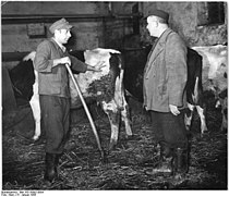Bundesarchiv Bild 183-35992-0004, Bergholz, Bauern im Kuhstall.jpg