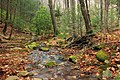 Burns Run Wild Area (8) (15132645324).jpg