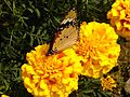 Butterfly @1.jpg