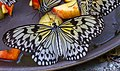 Butterfly Park & Insect Kingdom, Sentosa 14.jpg