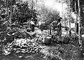 COLLECTIE TROPENMUSEUM Het oogsten van cacao op onderneming Assinan residentie Semarang Midden-Java TMnr 10012246.jpg