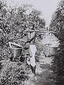 COLLECTIE TROPENMUSEUM Javaanse arbeider temidden van koffie- en cocaplanten op de coca- en koffieonderneming Margo Molio nabij Soemberglatik TMnr 60042355.jpg