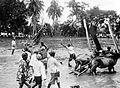 COLLECTIE TROPENMUSEUM Stierenrennen in een rijstveld Besoeki TMnr 10017875.jpg