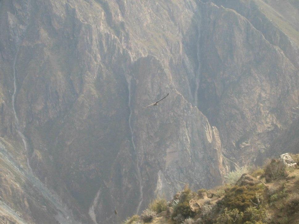 Cañón del Colca1 Arequipa lou