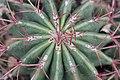 Cactus at Majorelle Garden.jpg
