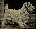 Cairn and Sealyham terriers (1922) (20485781146).jpg