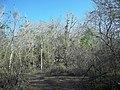 Calotmul (Yaxkukul), Yucatán (03).jpg