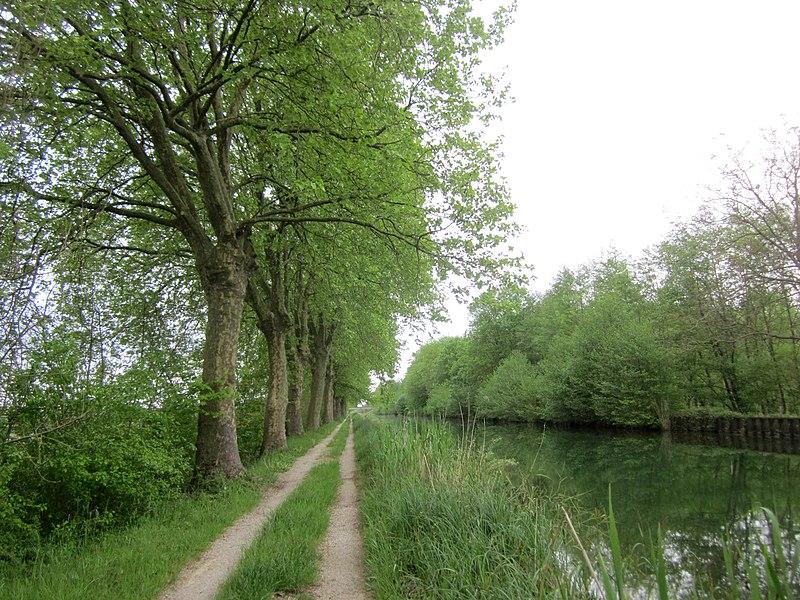Canal de la Marne au Rhin near Plichancourt