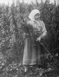 Cannabis in Russia