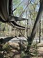 Canopy walk atlbotgarden.jpg