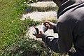 Captured Tern For Testing (4856995244).jpg