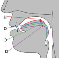 Cardinal vowel tongue position-back.png