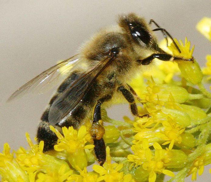 Bop the bee