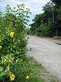 Carranglan,Nueva Ecijajf4004 14.JPG