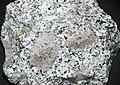Cathedral Peak Granodiorite (Late Cretaceous, 86-88 Ma; Yosemite National Park, California, USA).jpg
