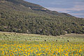 Cebolla Wilderness (9502796011).jpg