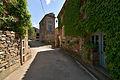 Ceps, Roquebrun, Hérault 07.jpg