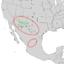Cercocarpus breviflorus range map 2.png