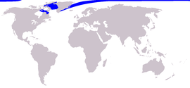 Cetacea range map Narwhal.png