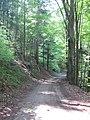 Chemin forestier - panoramio.jpg