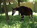 Chester Zoo (21901912419).jpg