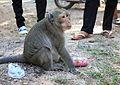 Chubby monkeys! (4331763326).jpg