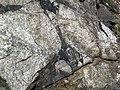 Clast-rich impact pseudotachylite (Sudbury Breccia, Paleoproterozoic, 1.85 Ga; Windy Lake Northwest roadcut, Sudbury Impact Structure, Ontario, Canada) 89 (47705925722).jpg
