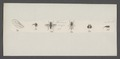 Clinocera - Print - Iconographia Zoologica - Special Collections University of Amsterdam - UBAINV0274 038 09 0006.tif