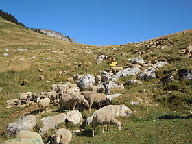 Image illustrative de l'article Col des Ayes