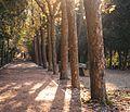 Collserola trees2.jpg