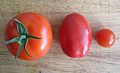 Comparison of the size of the tomatoes.jpg