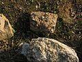 Coquina - panoramio.jpg