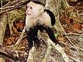 Costa Rica - panoramio (2).jpg