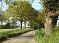 Country road between Great Henny and Henny Street - geograph.org.uk - 1270069.jpg