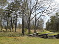 Cowpens National Battlefield - wilderness road and fence.jpg