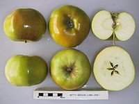 Cross section of Betty Geeson, National Fruit Collection (acc. 1982-205).jpg